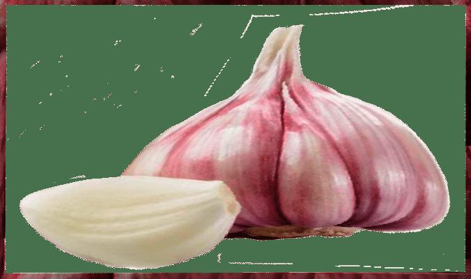 proprietà dell'aglio